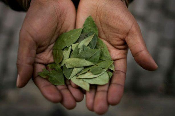 coca leaves cusco