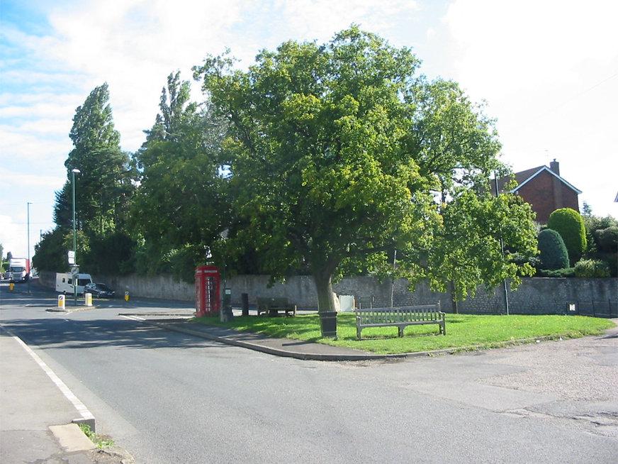 Oak tree on Loose Village Green