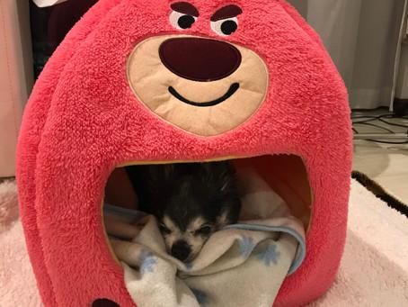 愛犬の新居