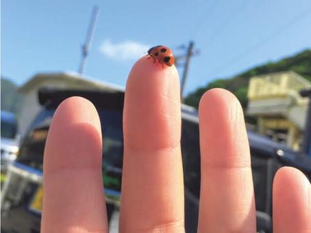 てんとう虫が好きすぎて。