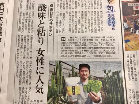 愛知県春日井市の食べるサボテン🌵