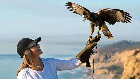 amazing falconry school class at Torrey Pines Gliderport in La Jolla