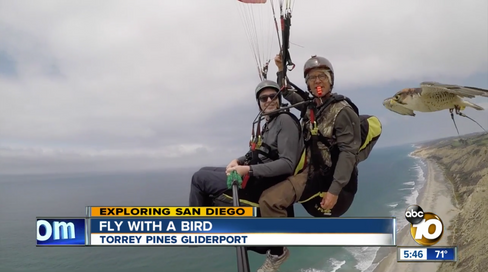 Parahawking with ABC NEWS Channel 10