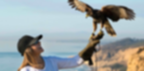 Total Raptor Experience, birdwatching, animal encounter, zoo, wildlife, nature, San Diego, falconry, beach, ocean