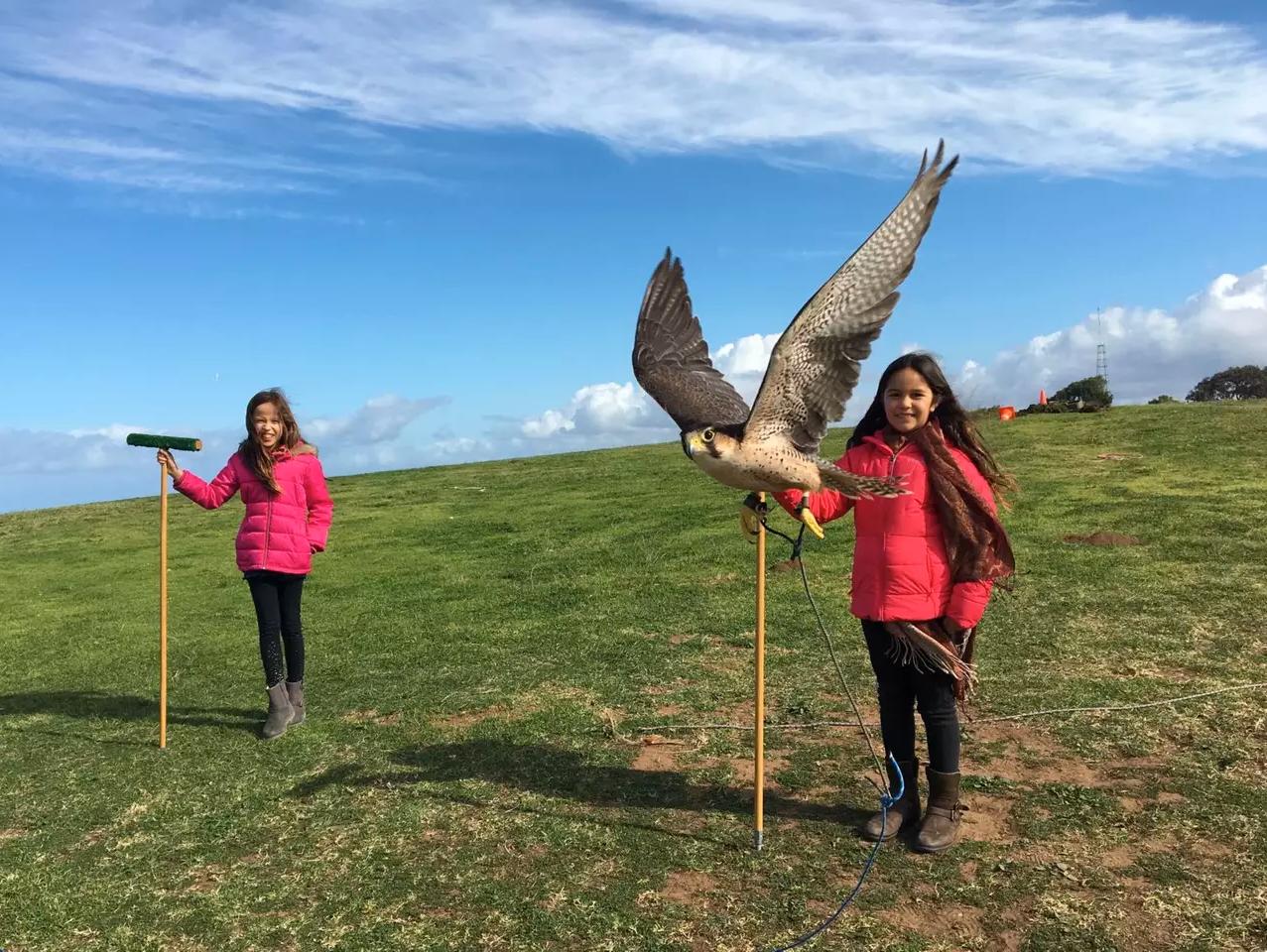 Falcon Flight Encounter