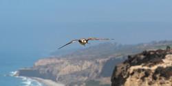 reggie cliffs_edited