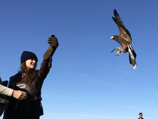Our Falconry Classes are well on their way!