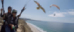 parahawking at TorreyPines Gliderport