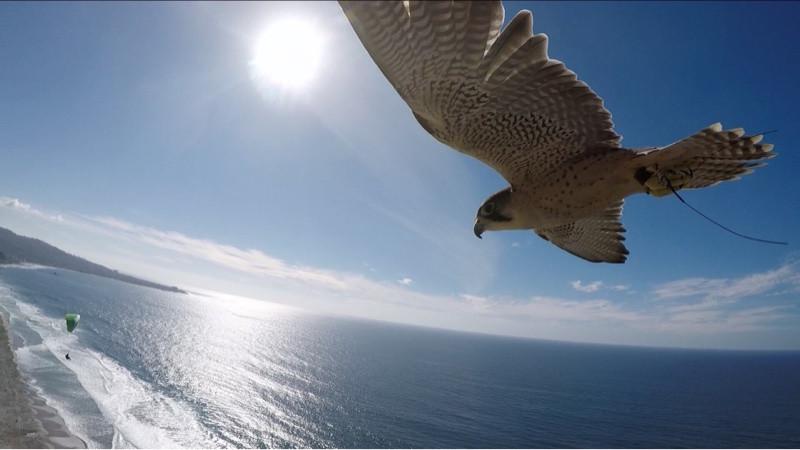 Total Raptor Experience, Falcon Flight Encounter