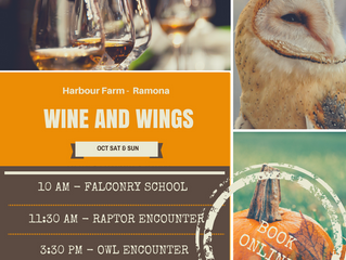 Introducing Wine and Wings!!!