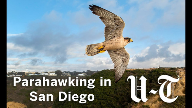 Parahawking in San Diego