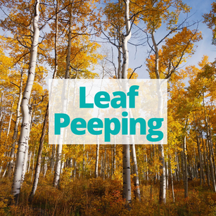 Leaf Peeping in Denver & Surrounding Areas