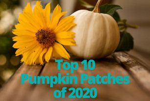 Top 10 Pumpkin Patches and Corn Mazes of 2020
