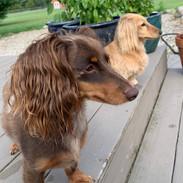 Stewie and Winnie.JPG