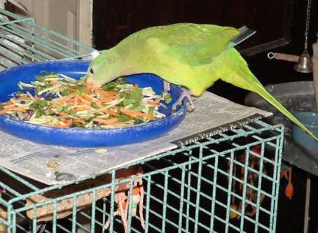 Give Your Bird A Healthy Start For A Long Life