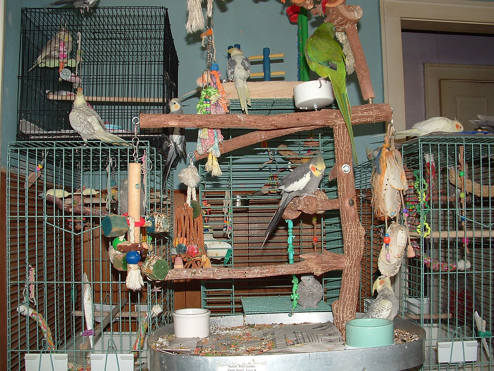 Parrot-Playgym