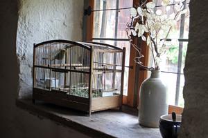 Birdcage-Windowsill