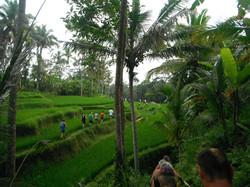 Bali Hash