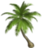 palm_tree_PNG2492.png