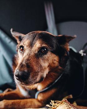 dog-takes-a-break.jpg