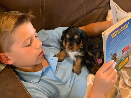 How We Set Your Puppy up for Success Before They Come Home