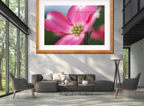 Pink Dog tan frame in Contemporary Living