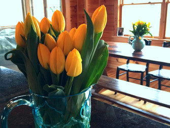 The only thing better than one vase of yellow tulips is two vases of yellow tulips.