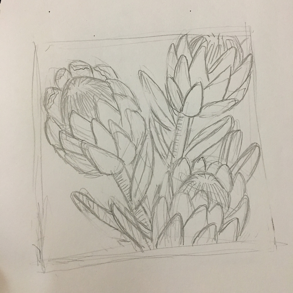 Rough protea draft by Brydie