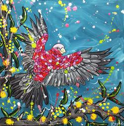 galah-cockatoo-painting-brydie-perkins-b
