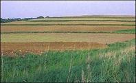 Buffer, crops, farmland