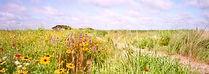wildflowers, pasture
