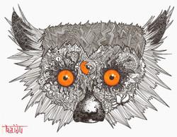 The Doodle Lemur