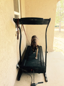 Mitch on the Treadmill