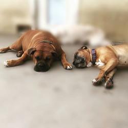 Jax & Solomon 😴💙😘 #sleepyboys #isitbe