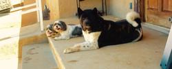 Dexter and Jackson hangin with Kuma