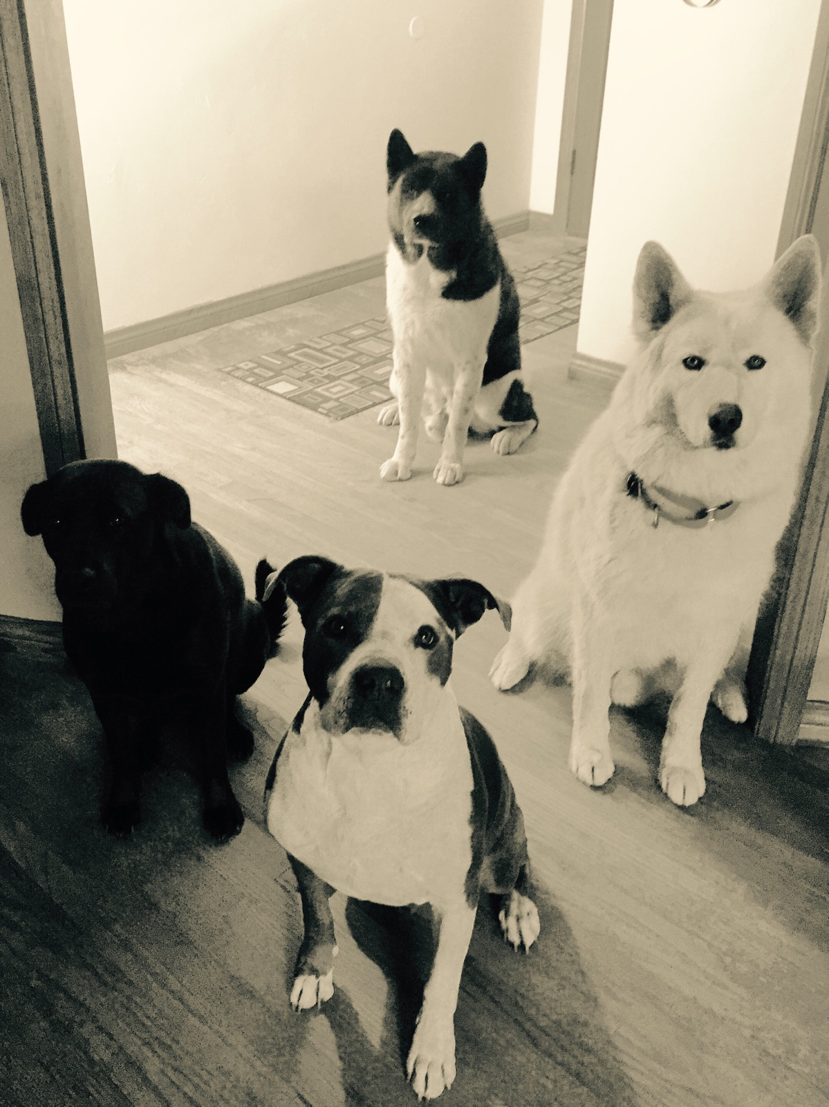 The Pack in Black and White