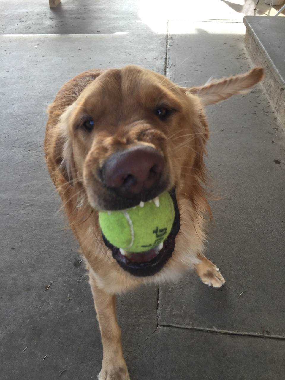 Tucker ready to play ball