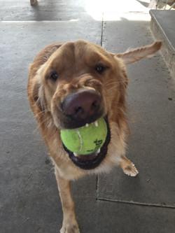 Tucker ready to play ball