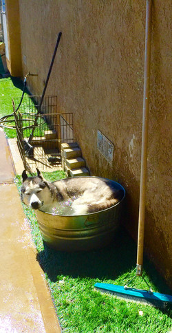Lukas in a bucket