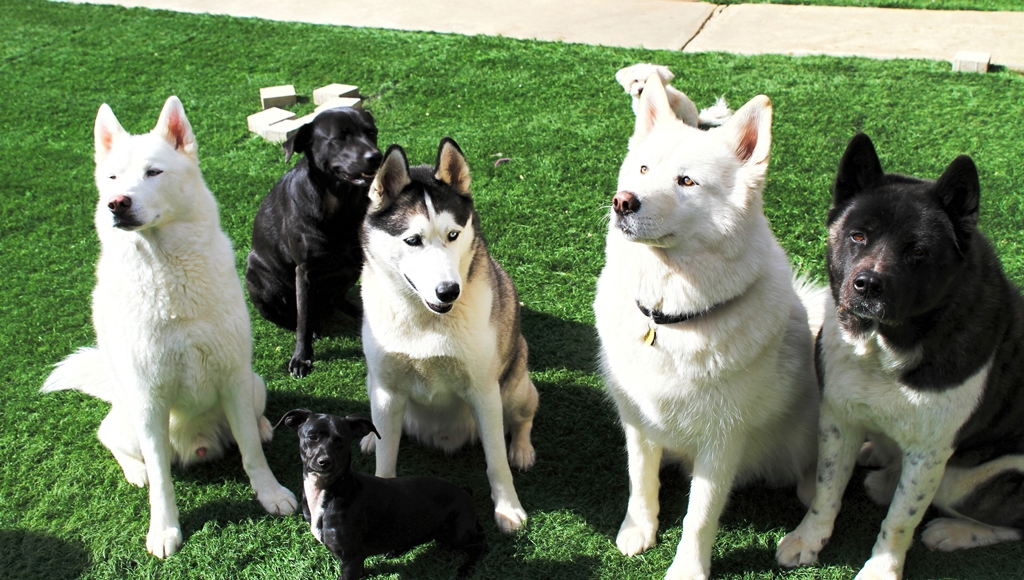 Kuma, Presley, Luke, Sully and Kuma