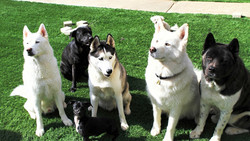 Kuma, Presley, Luke, Sully and Kuma