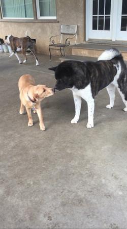Kuma & Juliette present the Kiss