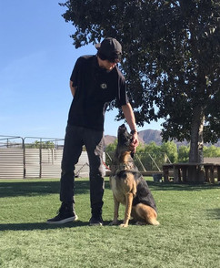 Training dogs are progressing nicely!! �