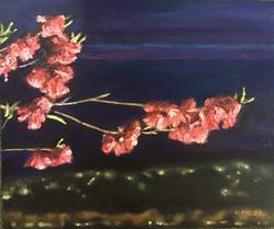 박재웅1, 봄밤, 45.5 x 38