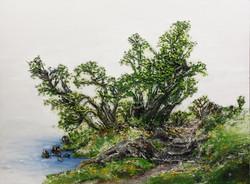 6. 호수길, 130x97cm, 캔버스 위에 흙, 실, 청바지, 2016
