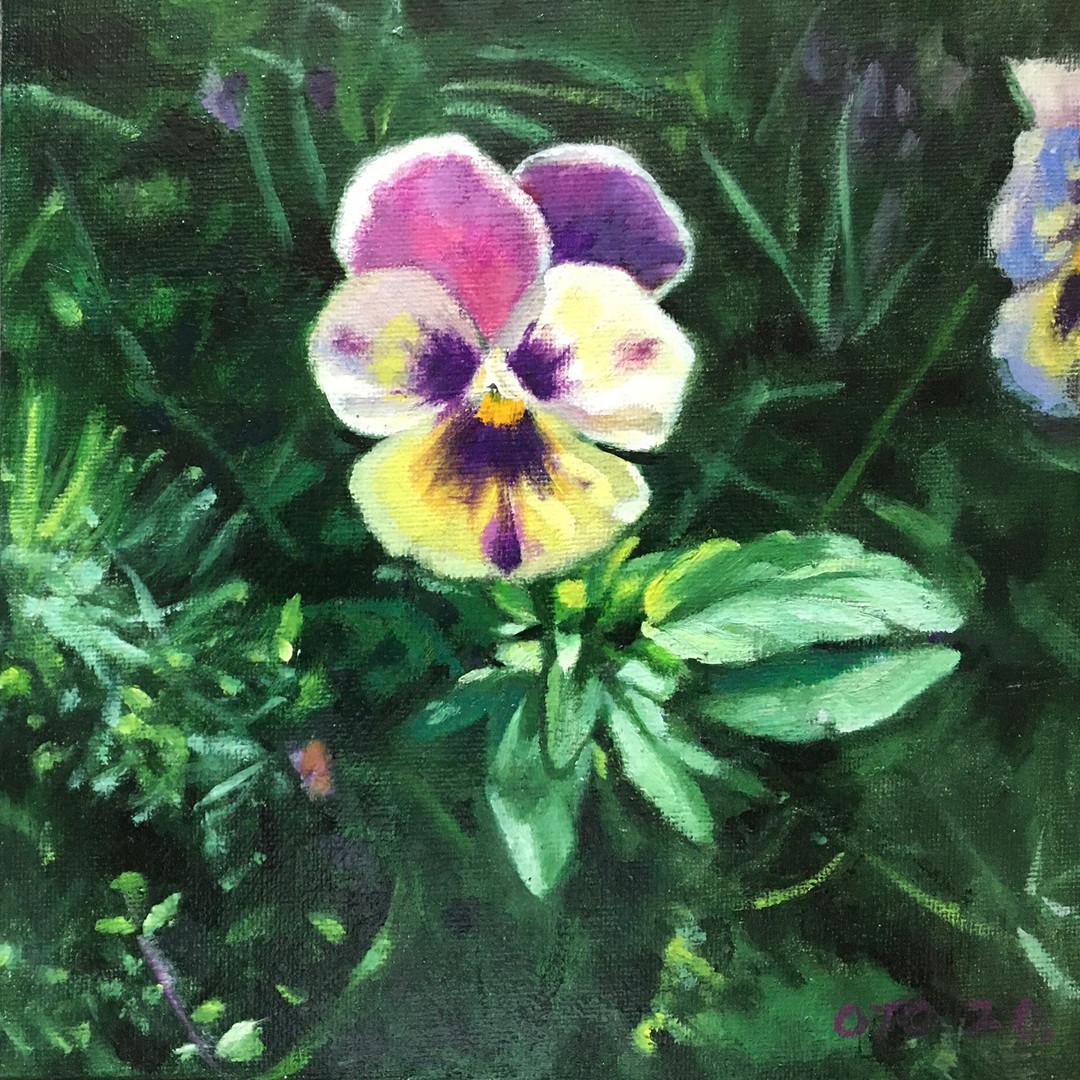 041, 팬지꽃, 20 x 20 cm, oil on canvas, 202