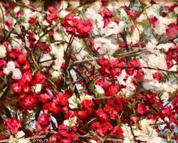 019, 박재웅, 겹벚꽃1, 50 x 40 cm, 보드 위에 유채, 20