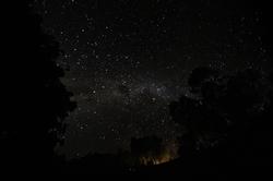 풍경_나무에 걸린 별, 안다시베_마다가스카르, 30.5 x 45