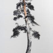 5번 2015,송뢰-초근목피,Muk Acrylic on HanJi,117