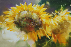 004, 박철환, Sunflower, 27.3 x 40